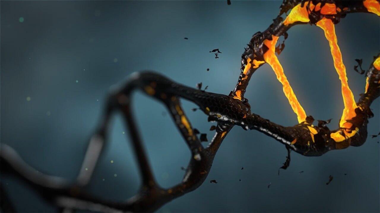 geschädigte DNA