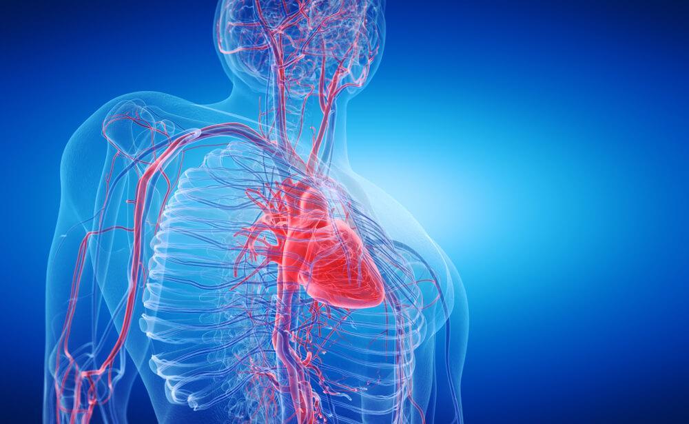 Öberkörper in Röntgensicht mit sichtbaren Gefäßen