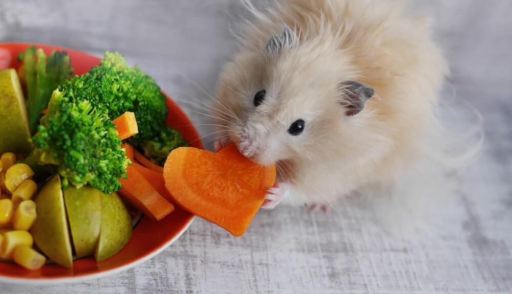 Tisch mit einem Hamster, der von einem Gemüseteller isst